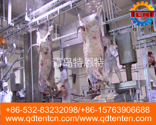 Cattle carcass automatic processing line(station stepper)